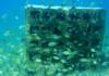 erdek-yapay-resif