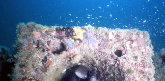 erdek-yapay-resifler